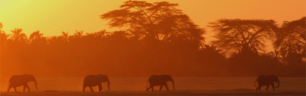 Severin Dream Road Safari