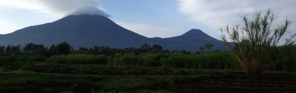 Gorilla Trekking Ruanda