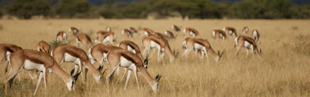 Botswana Wildpark