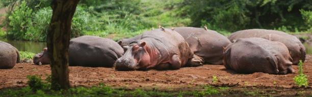 Stippvisite in Tanzania's wilderness