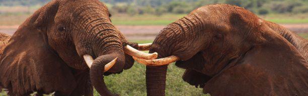 Air safari - Wildlife Heaven Selous National Park