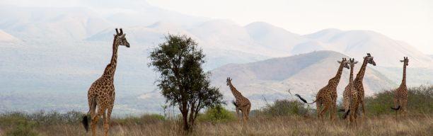Safari adventure Kenya