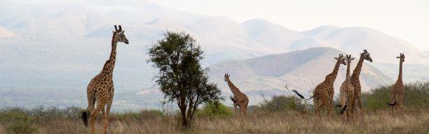 Tsavo Safari Adventure