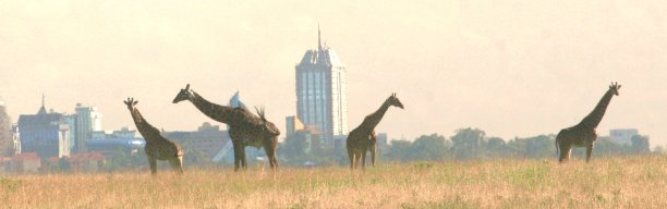 Nairobi National Park Excursion
