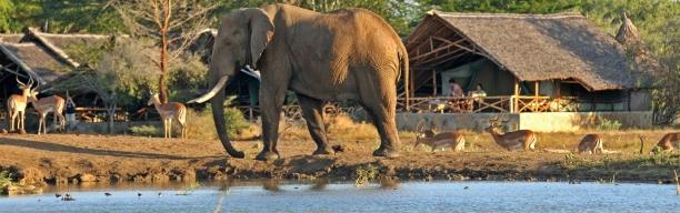 Satao Tsavo Road Safari