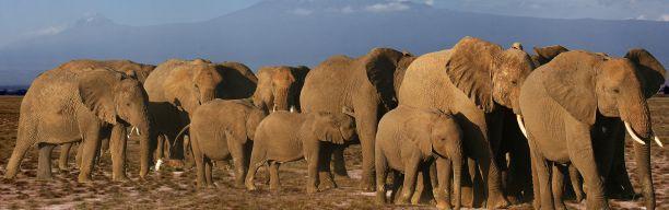 Magical Kenya Road Safari